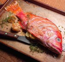 images/poissons/Red-snapper.jpg